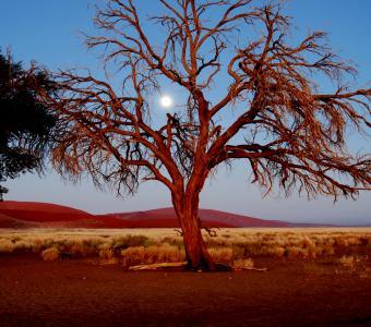 africa tree moon