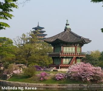 Melinda Ng, Korea