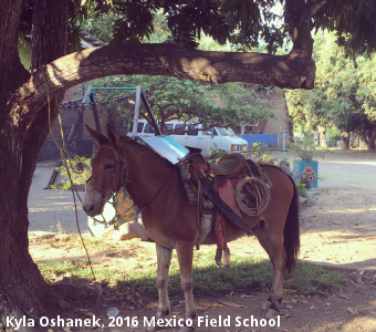 Kyla Oshanek, 2016 Mexico Field School