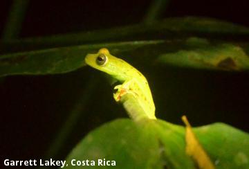 Garrett Lakey, Costa Rica